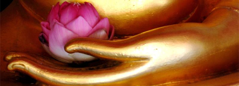 Lotus in Golden Hand