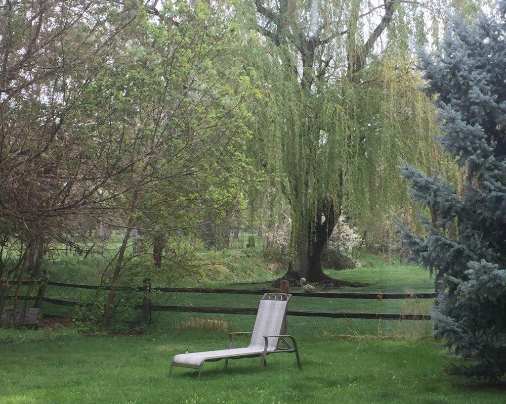 Backyard c